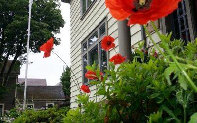 Flanders Poppies at Honour House