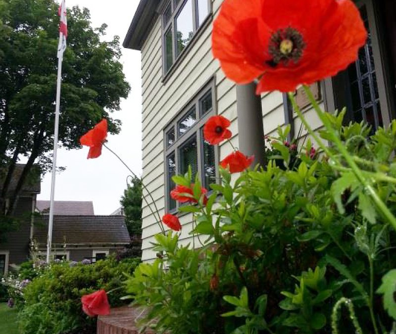 Flanders Poppies at Honour House